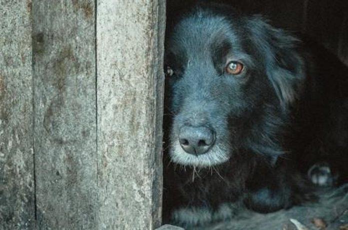 Atropelamento de cães e gatos poderá ter punições, prevê projeto