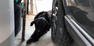 Polícia Civil orienta sobre crime de maus-tratos contra animais
