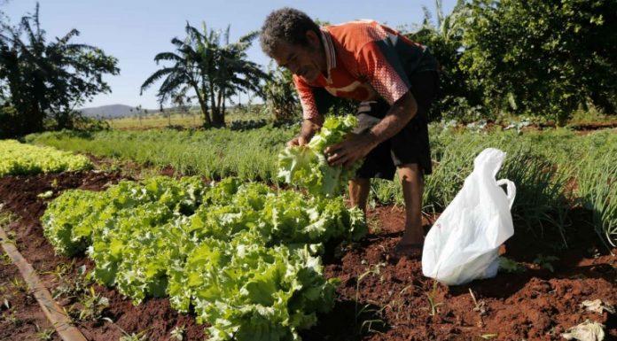 Desigualdade no prato: Um retrato das contradições do sistema alimentar brasileiro