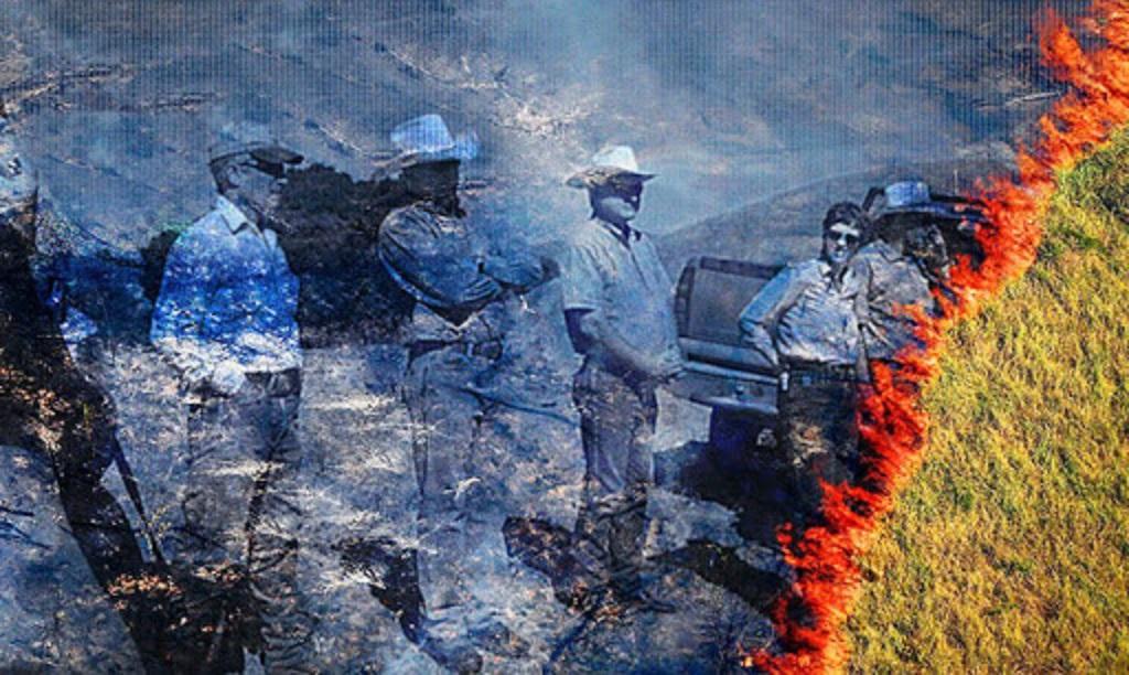 """""""Grilagem organizada"""" ameaça biodiversidade e comunidades do Matopiba"""